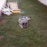 My Dog Jacky!